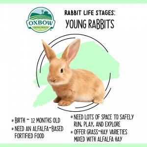 ช่วงอายุขัยกระต่าย